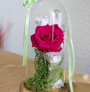 Trandafir criogenat Floraria Bloom
